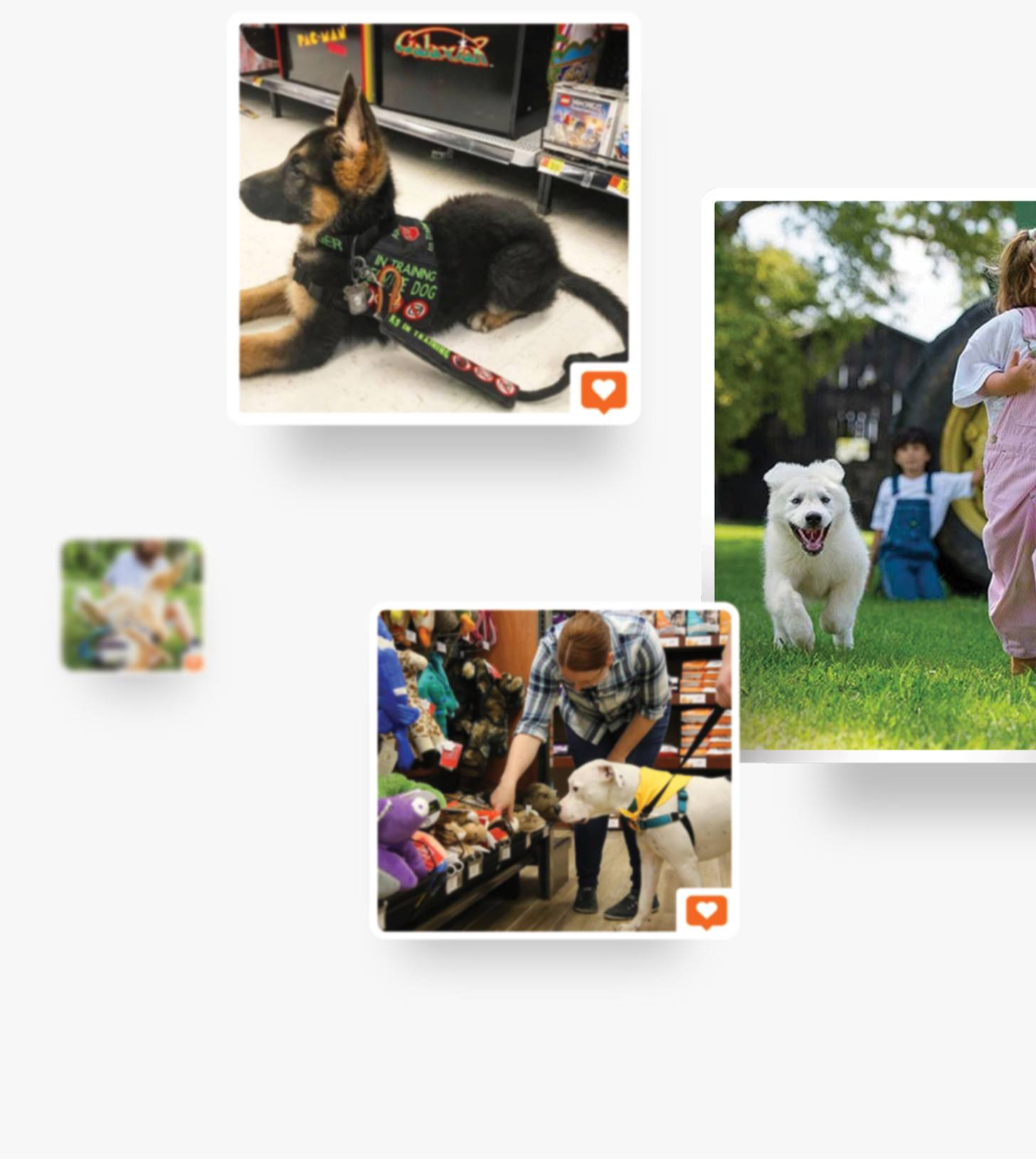 Pets and pet owners collage